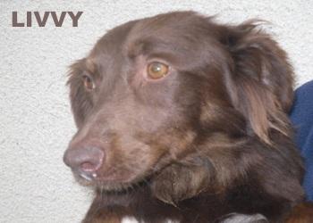Love Cyprus Dog Rescue